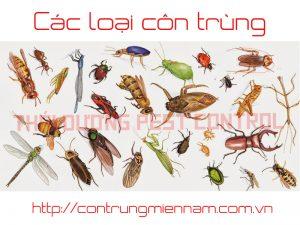 Các loại côn trùng