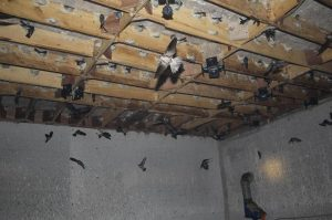 diệt côn trùng cho nhà yến