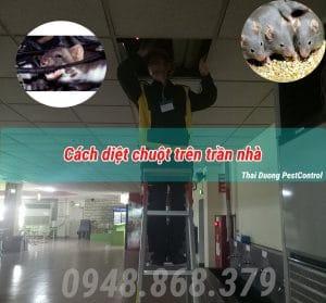 Cách diệt chuột trên trần nhà