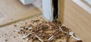 Mối ăn gỗ, phá hoại nhà cửa
