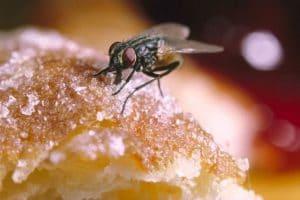 Tác hại của ruồi với quán ăn